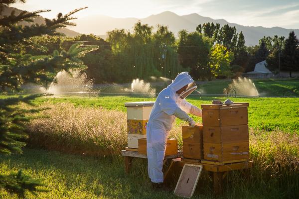Beekeeping Paradise (1)